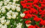 отдых в Крыму: Ботанический сад