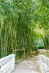 отдых в Крыму: бамбуковая роща в Никитском ботаническом саду