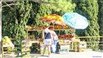 отдых в Крыму: фруктовый базарчик в Мисхоре