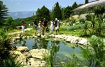 отдых в Крыму: Пруд с лилиями