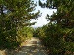 отдых в Крыму: Дорога на Эльчидаг