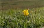 отдых в Крыму: Раз тюльпан два тюльпан...