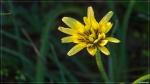 отдых в Крыму: Полевые цветы