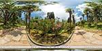 отдых в Крыму: Пальмовая аллея в Воронцовском парке