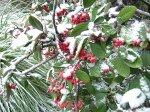 отдых в Крыму: Алупка зимой