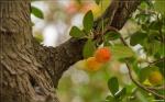 отдых в Крыму: Диковинные ягодки
