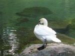 отдых в Крыму: Обитатели Воронцовского парка