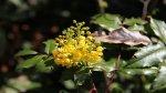 отдых в Крыму: Весна в Воронцовском парке