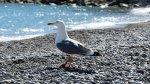 отдых в Крыму: Чайка