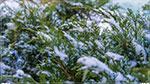 отдых в Крыму: В Севастополе зима!