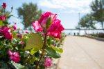 отдых в Крыму: Розарий на пляже. Орловка.