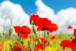 отдых в Крыму: Яркие краски весны!