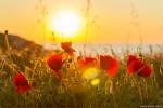 отдых в Крыму: Херсонес. Весенний закат на фоне моря.
