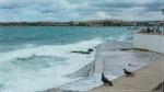 отдых в Крыму: Море и голуби