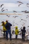 отдых в Крыму: Зимние радости - лебеди в Севастополе!
