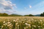 отдых в Крыму: Ромашковое поле. Байдарская долина.