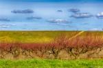 отдых в Крыму: Персиковый сад. Начало :)