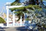 отдых в Крыму: Весна в Севастополе