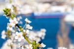 отдых в Крыму: Весенние краски Севастополя. Цветы и море.