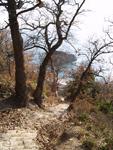 отдых в Крыму: Фиолент