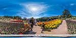 отдых в Крыму: Парад тюльпанов в Никитском ботаническом саду