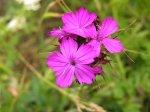 отдых в Крыму: Цветы