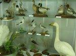 отдых в Крыму: В музее (биостанция Карадаг)