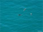 отдых в Крыму: Дельфины у берегов Балаклавы