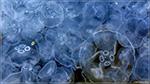 отдых в Крыму: Зимние медузы в Балаклаве!