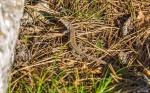отдых в Крыму: Ящерица