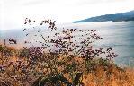 отдых в Крыму: Цветок