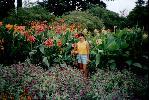 отдых в Крыму: Никитский ботанический сад