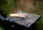 отдых в Крыму: Очень ленивое насекомое.