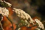 отдых в Крыму: Неопознанное растение